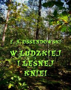 W ludzkiej i leśnej kniei
